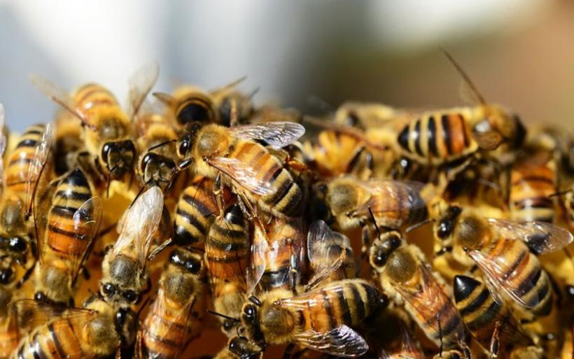 Τραγωδία στην Εύβοια: Ψαράς έπεσε νεκρός από τσιμπήματα μελισσών που απελευθερώθηκαν μετά από τροχαίο!