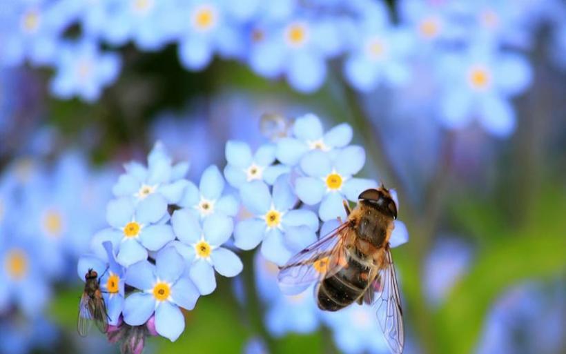 Τα έντομα οδεύουν προς τον αφανισμό και μπορεί να παρασύρουν μαζί τους στον όλεθρο όλο τον πλανήτη!