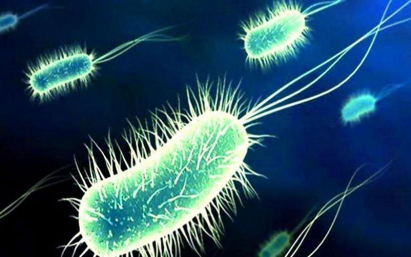 ΟΟΣΑ: Σχεδόν 70.000 άνθρωποι στην Ελλάδα μπορεί να πεθάνουν μεταξύ 2015-2050 λόγω μικροβίων