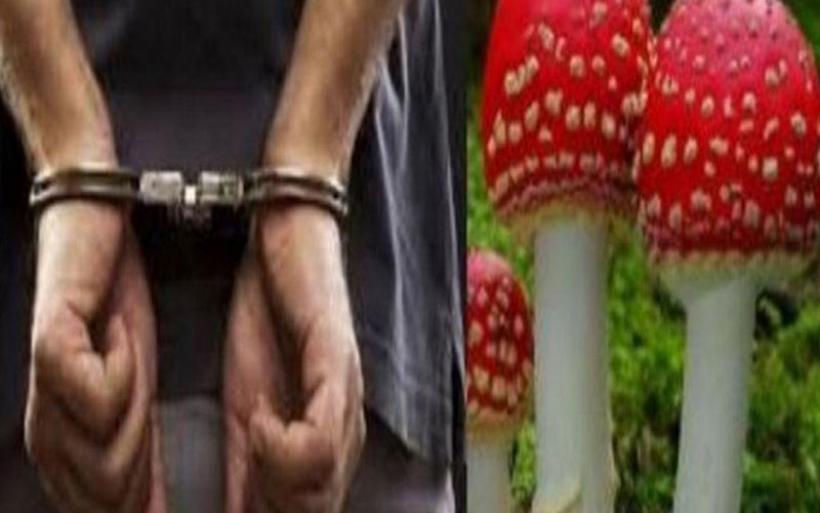 Βόλος:Συνελήφθησαν για ναρκωτικά ενώ κατασχέθηκαν παραισθησιογόνα μανιτάρια