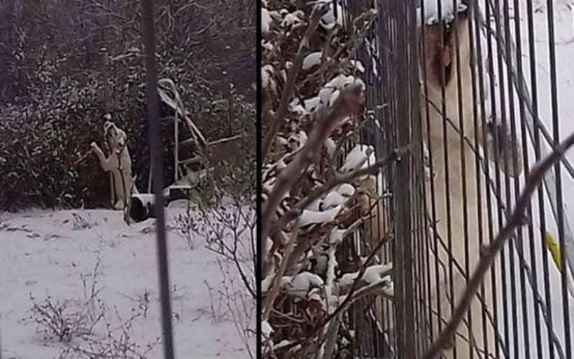 Δράμα: Έδεσε τον σκύλο του στο χωράφι με -12 βαθμούς Κελσίου και βρέθηκε παγωμένος