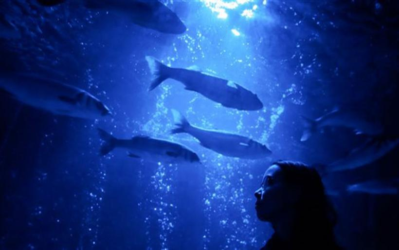 Μέχρι το 2050 τα ψάρια δεν θα αποτελούν βασική πηγή τροφής