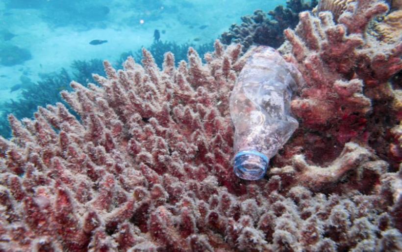 Το 1/3 των κοραλλιογενών υφάλων στον πλανήτη είναι γεμάτο με πλαστικά απόβλητα