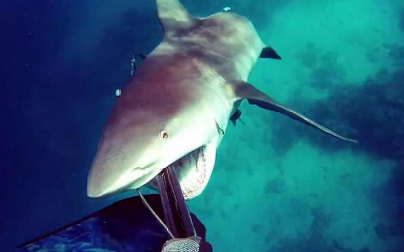 Λυσσαλέα επίθεση ενός καρχαρία σε ψαροντουφεκά στην Αυστραλία