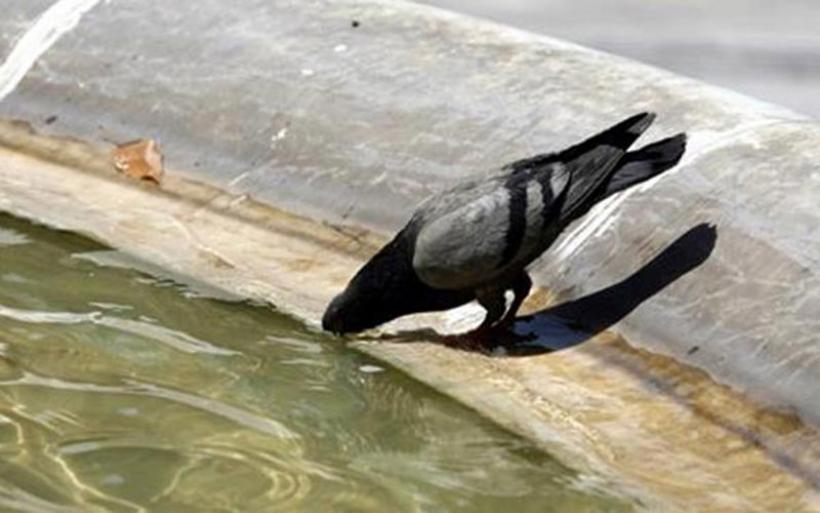 Έριξαν χλωρίνη σε συντριβάνι στο κέντρο του Ηρακλείου