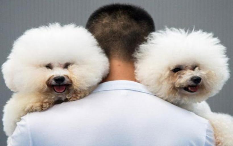 Αναστάτωση στη Νορβηγία για την άγνωστη ασθένεια που εξοντώνει τους σκύλους