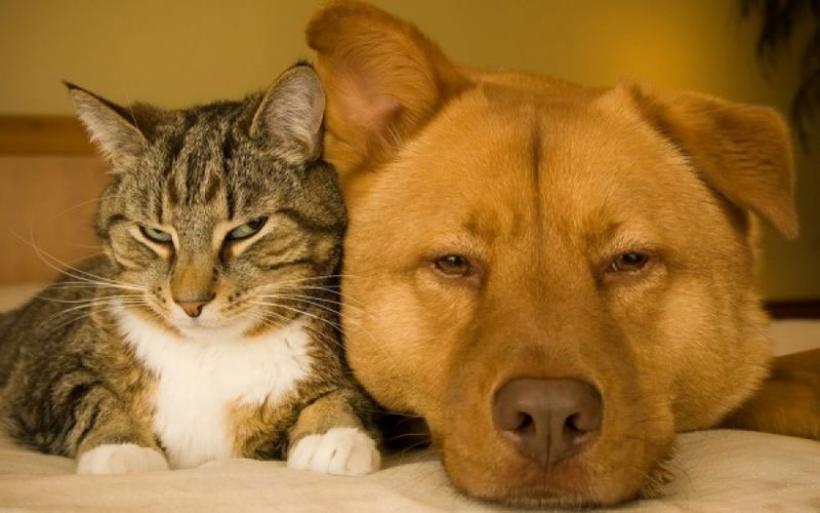 Βόλος: Eισαγγελική έρευνα για θανάτωση ζώων σε Αλμυρό και Κριθαριά
