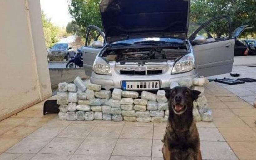 Κιλκίς: Αστυνομικός σκύλος «ξετρύπωσε» περισσότερα από 32 κιλά κάνναβης σε ΙΧ