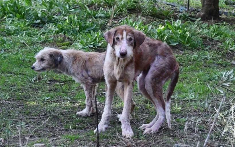"""Έρευνα της Εισαγγελίας για το """"κολαστήριο"""" σκύλων στην Αγχίαλο – Προσπάθεια να υιοθετηθούν τα ζώα"""