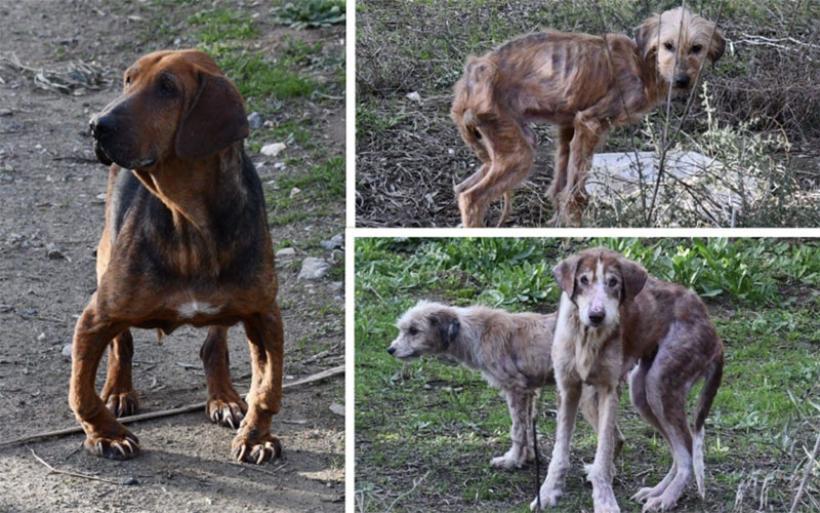 Σοκ στη Ν. Αγχίαλο: Ανακαλύφθηκε τόπος μαρτυρίου σκύλων [σκληρές εικόνες]