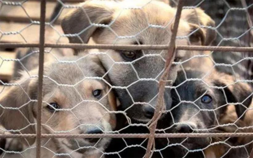 Προκαταρκτική για τη μεταφορά σκύλων και γάτων με φορτηγάκι – Είχε καταγγελθεί κύκλωμα εξαγωγής και στον Βόλο