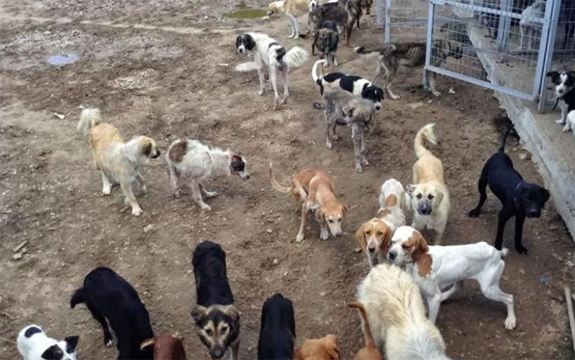Προβληματίζει η έλλειψη κυνοκομείου στον Αλμυρό – «Ωρολογιακή βόμβα» κτήμα με 350 σκυλιά