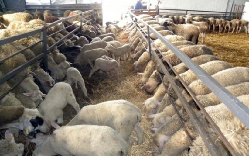 Παράταση προθεσμίας υποβολής αιτήσεων για έκδοση αδείας διατήρησης κτηνοτροφικής εγκατάστασης εντός και πλησίον οικισμών