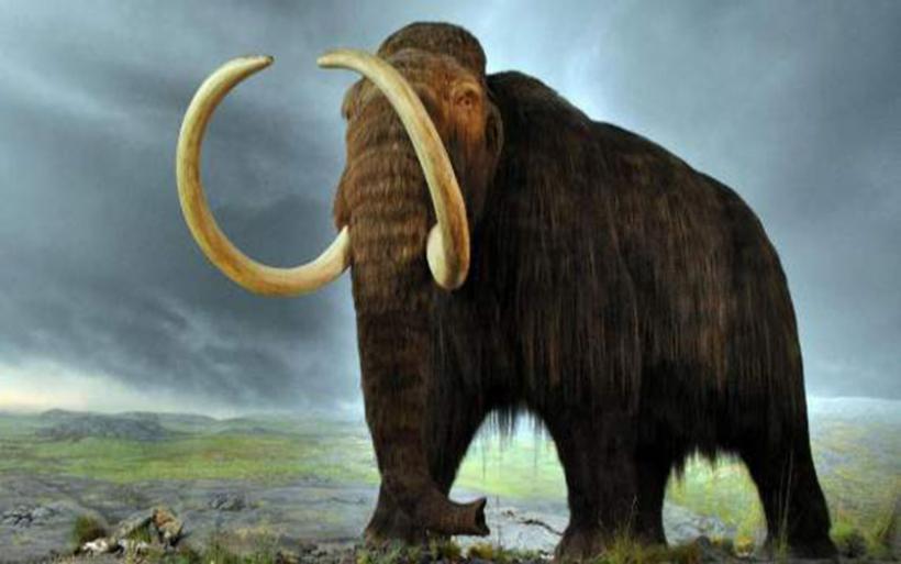 Σε δύο χρόνια θα δημιουργηθεί το πρώτο υβρίδιο μαμούθ-ελέφαντα