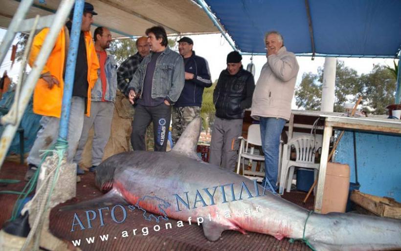 Στα δίχτυα καρχαρίας στον Αργολικό λίγα μίλια από το Ναύπλιο