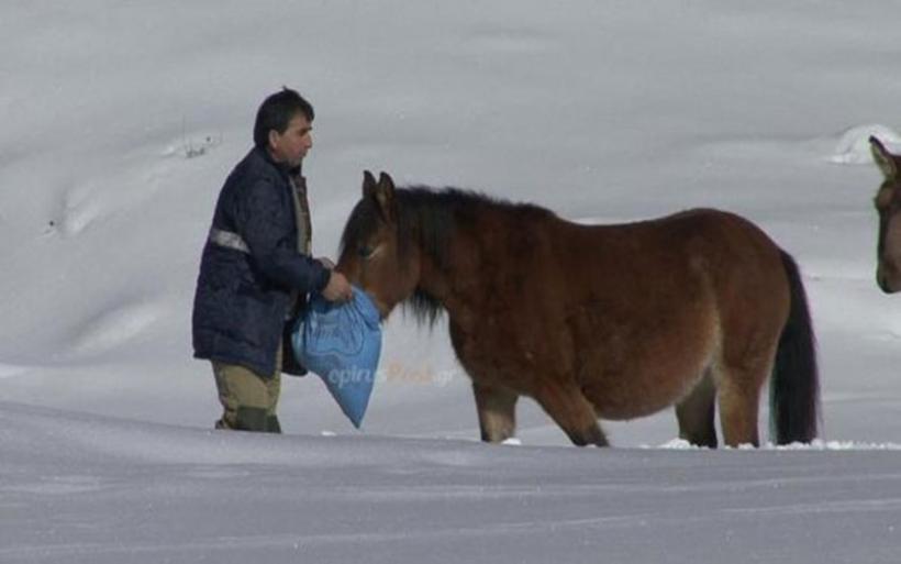 Η συγκλονιστική διάσωση 20 αλόγων στην ορεινή Ηπειρο