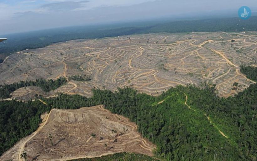 Αίτημα παράτασης ως 30/9 για τους δασικούς χάρτες