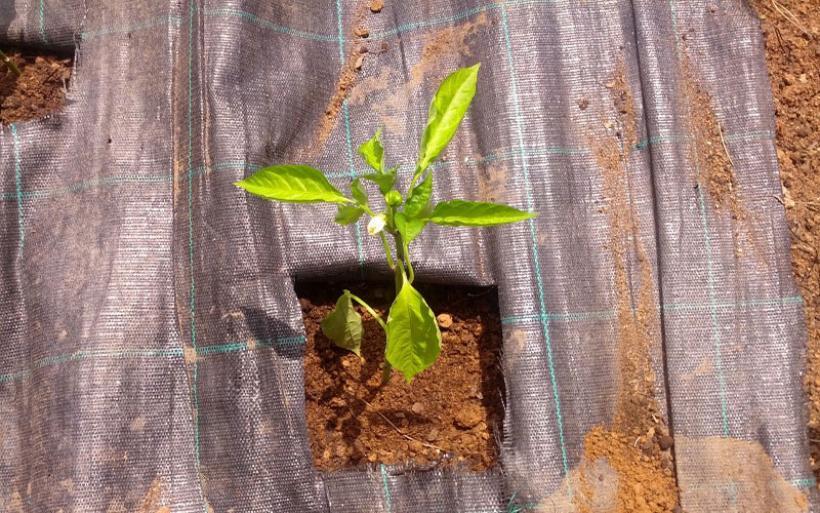 Καλοκαιρινός λαχανόκηπος χωρίς ζιζάνια