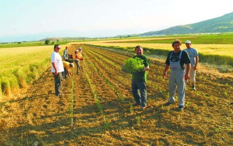 Αυξάνεται ο αριθμός των νέων αγροτών
