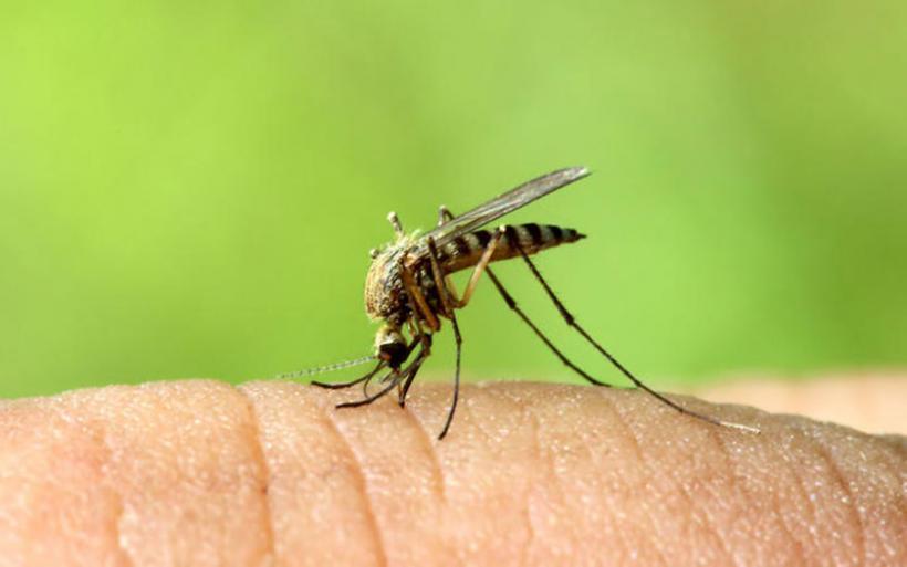 «Επέστρεψε» ο ιός του Δυτικού Νείλου-Κρούσμα στην Αργολίδα