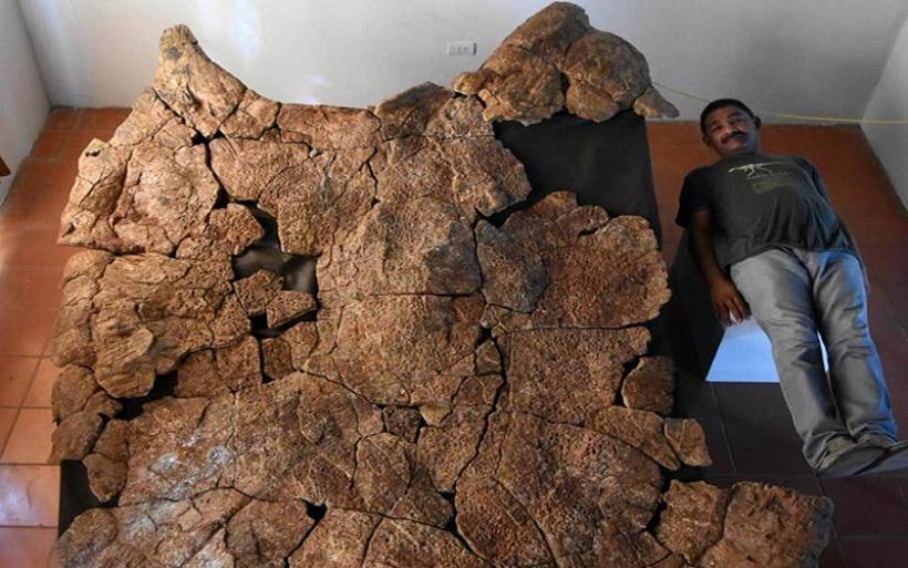 Ανακαλύφθηκαν απολιθώματα γιγάντιας χελώνας, που είχε μέγεθος... αυτοκινήτου