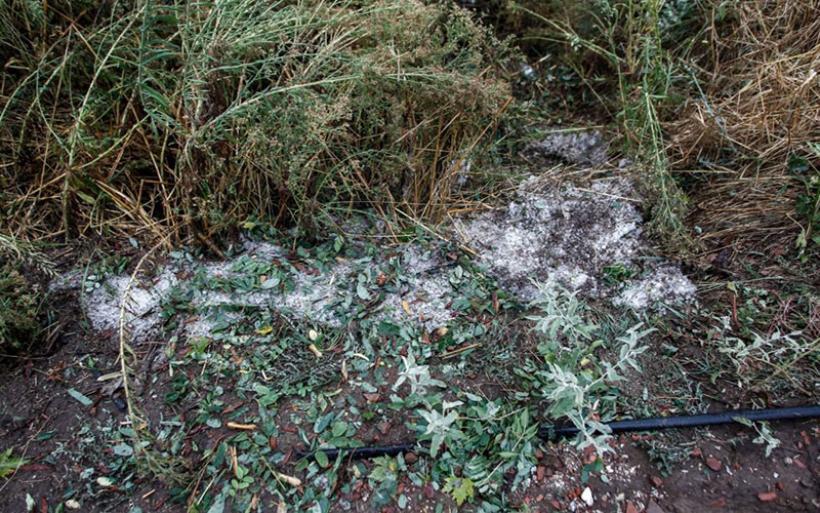 Αγρότες – Σήμερα καταβάλλονται οι αποζημιώσεις παγετού