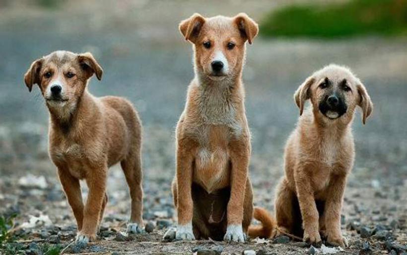 Μόνο αδέσποτα στα pet shops της Καλιφόρνια