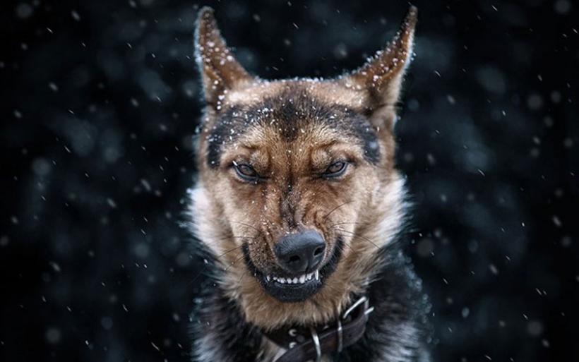 Όταν τα ζώα ποζάρουν στο φακό