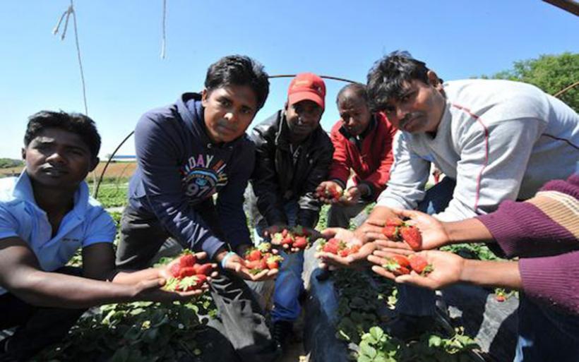 Δικαίωση των εργαζομένων της Μανωλάδας από το Ευρωπαϊκό Δικαστήριο