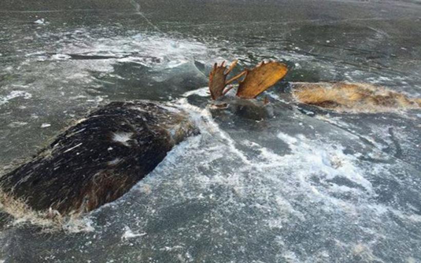 Ένας άνδρας ανακάλυψε δύο παγωμένα ελάφια σε ποτάμι στην Αλάσκα