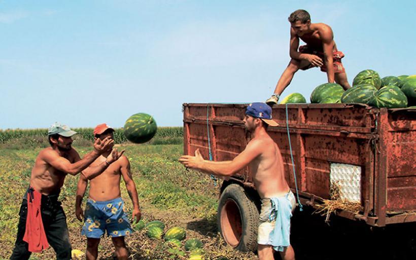 Τέλος χρόνου 31 Μαρτίου για υποβολή ετήσιας συγκεντρωτικής των αγροτών