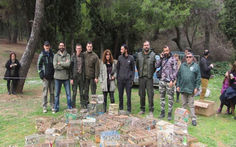 Μεγάλη επιχείρηση της Θηροφυλακής στο παζάρι του Σχιστού - κατασχέθηκαν 1.468 άγρια πουλιά