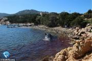 Αίσχος! Έγκυος φάλαινα ξεβράστηκε στην Ιταλία με 22 κιλά σκουπίδια στο στομάχι της