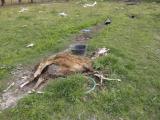 Σοκάρουν οι εικόνες: Πάρκο άγριων ζώων στην Πάτρα είχε μετατραπεί σε νεκροταφείο