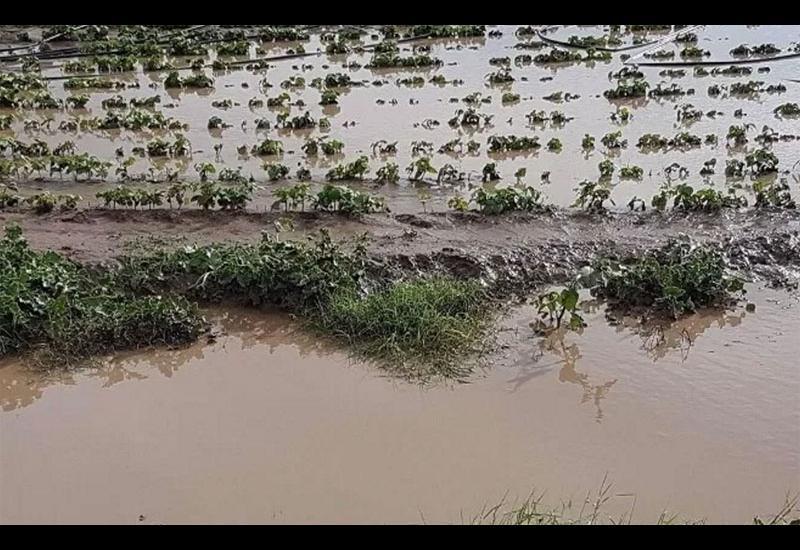 Ζημιές σε χιλιάδες στρέμματα καλλιεργειών από τη βροχή και το χαλάζι σε Αλμυρό και Βελεστίνο