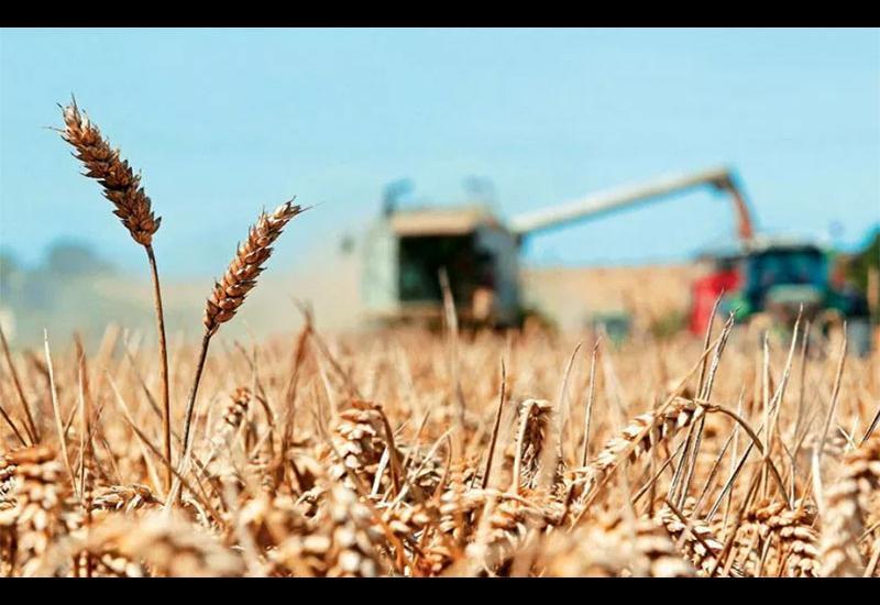 Μέτρια παραγωγή και χαμηλές τιμές στα σιτηρά – Απαισιόδοξοι οι αγρότες στο τέλος του αλωνισμού